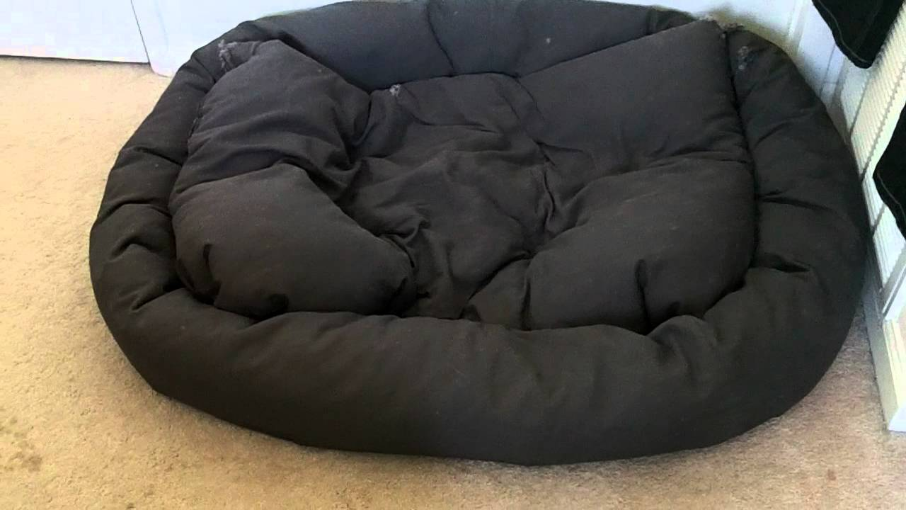 xl mammoth dog bed review - luke skywalker great dane - youtube