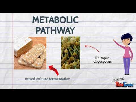 food fermentation - Rhizopus oligosporus