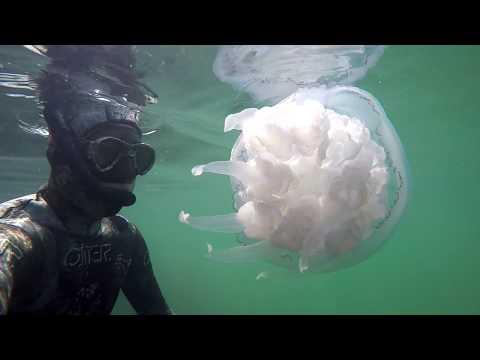 Cea mai mare meduza pe care am vazut-o vreodata  in Marea Neagra