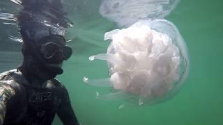 Cea mai mare meduza pe care am vazut-o vreodata  in Marea Neagra !!! Video