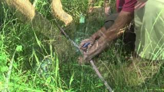 Pasture Soil Health Project, Matt Bomgardner - Year 1