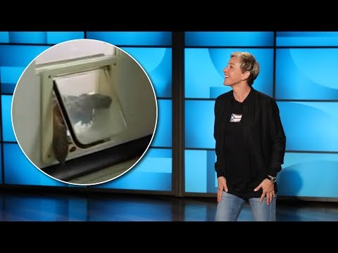 Can You Guess 'What's in the Doggie Door' Before Ellen?