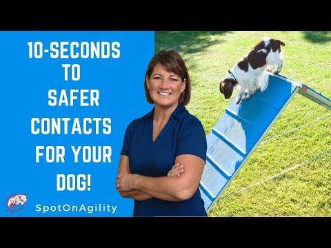 Agility Equipment For Dogs (10 Seconds To Safer Contacts For YOUR Dog!)