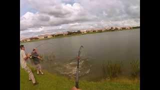 Cody 10 foot 6 inch gator hunt