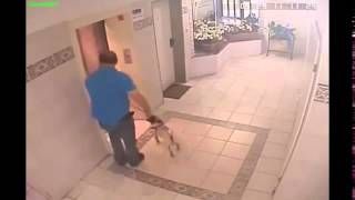 Женщина с собакой и лифт.