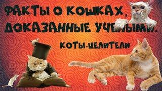 Факты о кошках, доказанные учеными  Коты целители