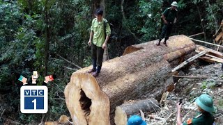 """Phát hiện vụ phá rừng với quy mô """"khủng"""""""