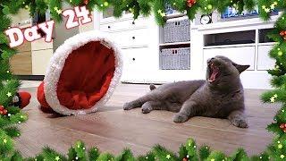 COZY CAT CHRISTMAS EVE!   VLOGMAS DAY 24 - CHRIS & EVE