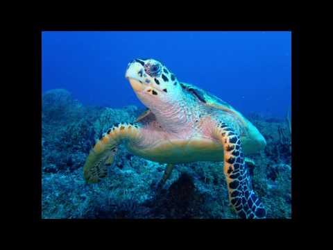 Olympus TG4 Underwater camera Episode 1