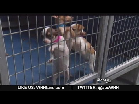 Puppies Safe After Pet Store Arson in Las Vegas