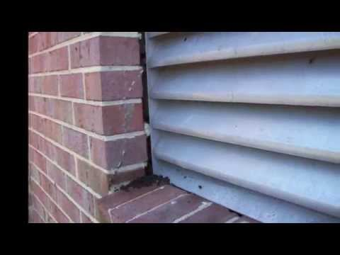 Bat Trapping & Removal from Attics, Sheds & Barns in Silver Spring, MD