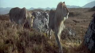 Smilodon or Saber toothed cat