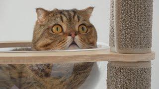 고양이-몰래-밥을-먹으면-생기는-일