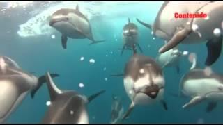 ¿Cómo duermen los peces y delfines?