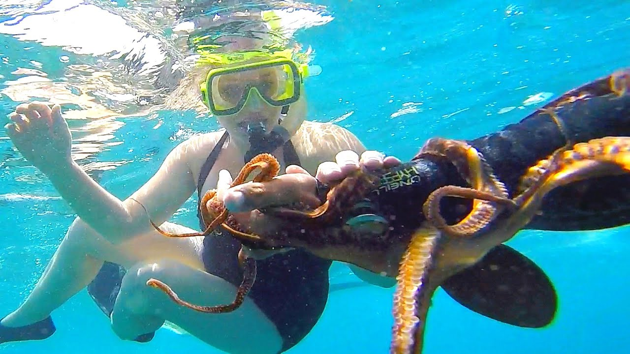 swimming with an octopus in hawaii  youtube
