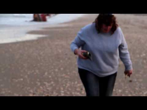 Millions of Shells Padre Island National Sea Shore