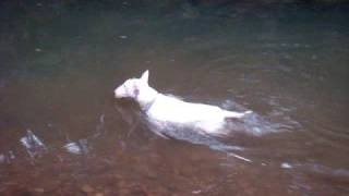 Phelps of the dog world. My dog Ace is addicted to swimming. This i...