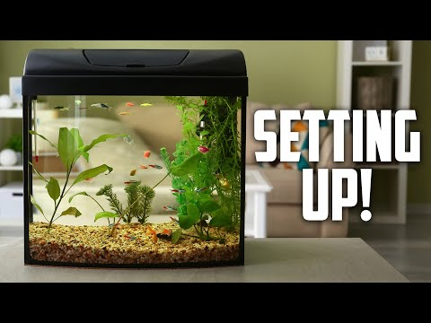 How to Set up a Fish Tank or Aquarium. How Much Does a Fish Tank or Aquarium Cost?