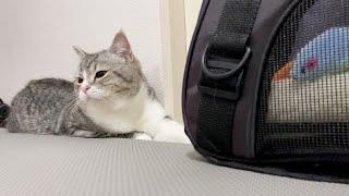 今日は病院に行かないと決めたもち猫の意地がすごいです…汗