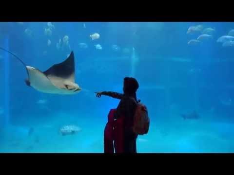 Osaka Aquarium Kaiyukan 01