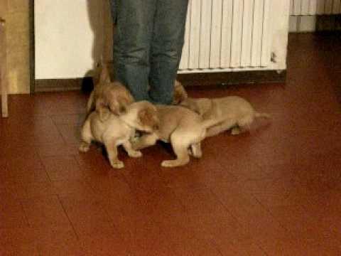 Cuccioli in adozione allo Snoopy di Siracusa