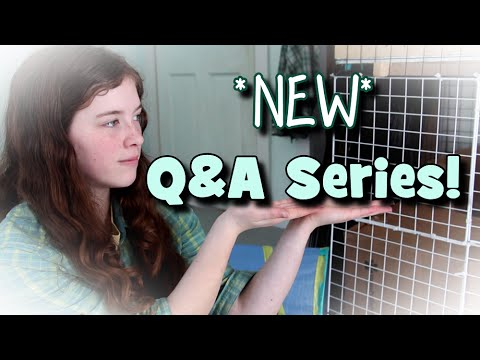 Intro To NEW Q & A Series! -Ask Abby-