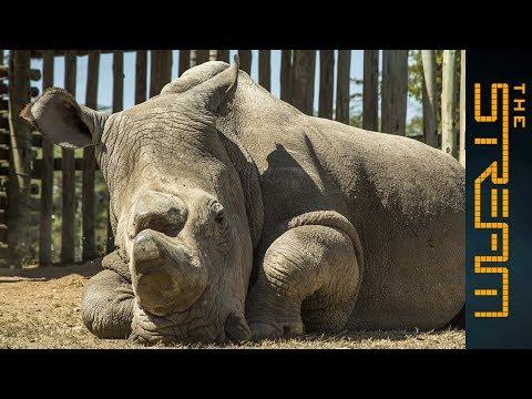 Should We Let Some Endangered Species Die? | The Stream