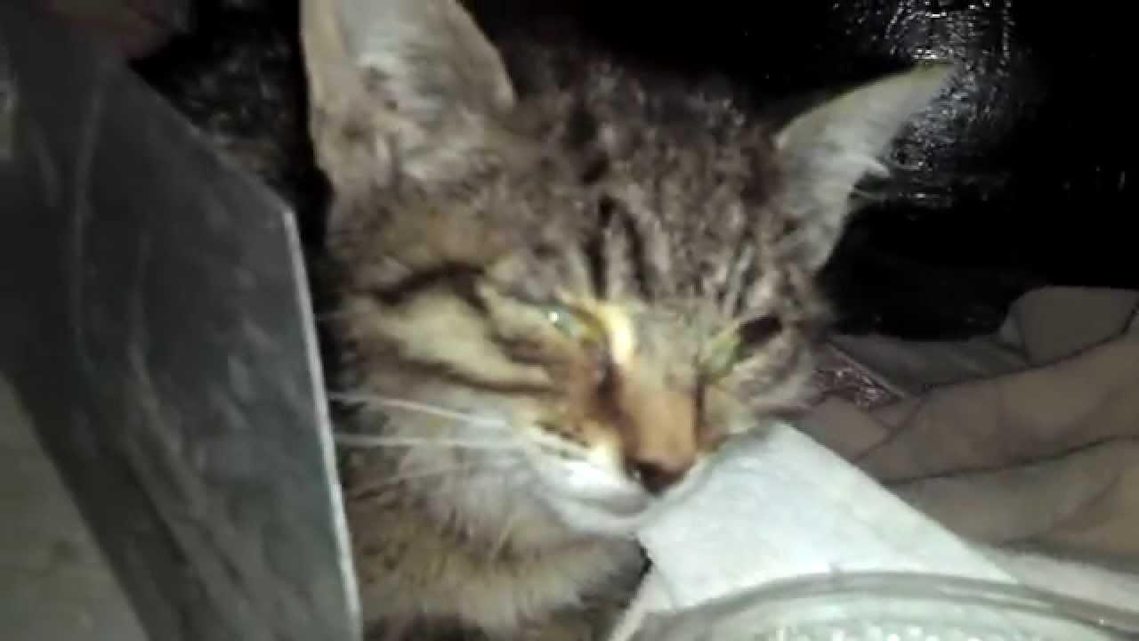 Как коты умирают от хпн