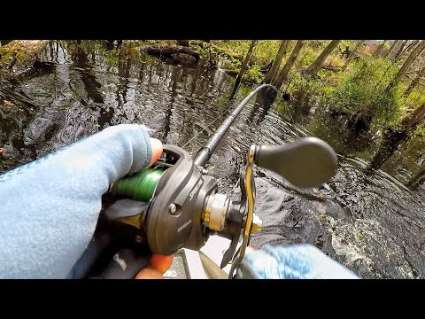 Bass Fishing The Back Creeks Of The St Johns River