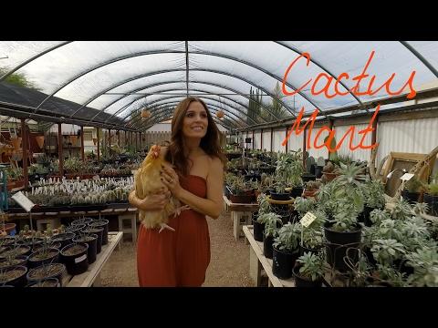 Cactus Mart ~ Wander List
