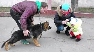 Социализация Джесси. Щенок Немецкой овчарки 3,5 мес. Socialization of German Shepherd puppy.