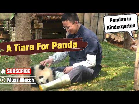 【Panda Top3】Daddy makes a tiara for panda princess!