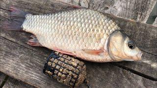 Ловля карася на инлайн рыбалка на карася 2020 простая рыбалка на снасть убийца карася