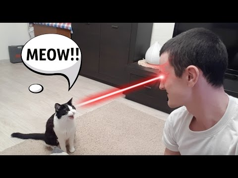 MEOW ! Eye contact between a cat and a human