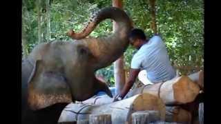 Крутое путешествие.Отдых на Шри Ланке.  (vlastelin20081)(, 2012-10-26T15:02:33.000Z)