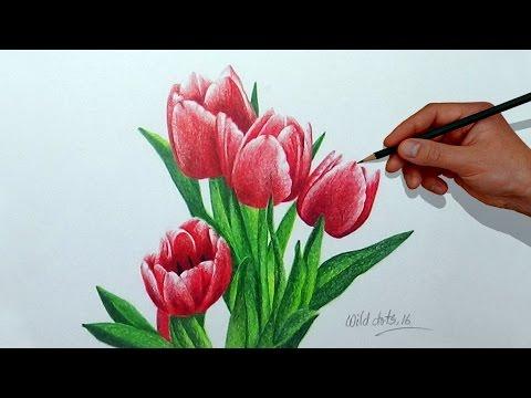Cara Menggambar Bunga Tulip Menggunakan Pensil Semburat Warna