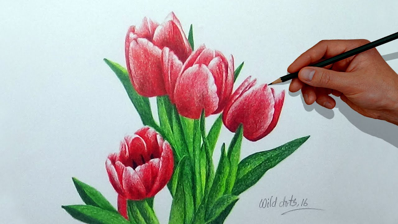 How To Draw A Flower With Simple Colored Pencils - Tulip ...
