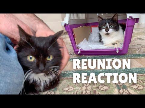 Separately rescued sibling kittens reunite
