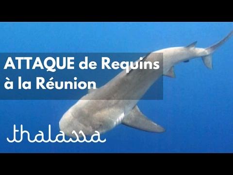 Attaque de requins à La Réunion (reportage complet)