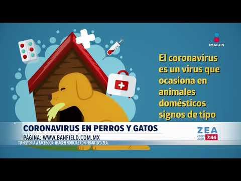 ¿El Coronavirus Afecta A Perros Y Gatos? | Noticias Con Francisco Zea