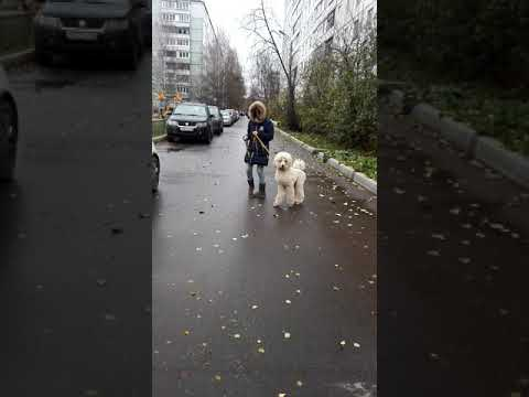 Леггеро Данзатори Рансиман 8 м