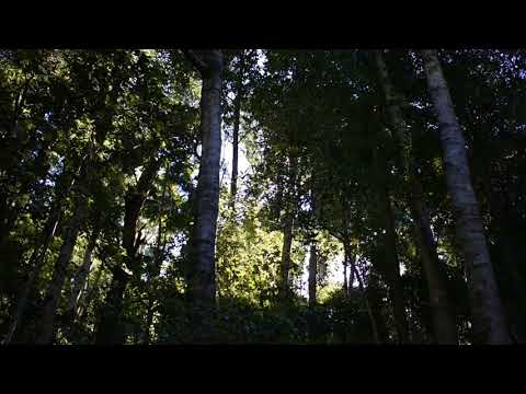 Free Stock Footage !!!!! | Rainforest | Nature Forest #3 HD