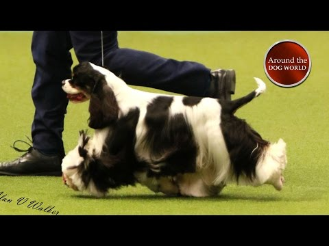 Around the Dog World - Crufts and Pawscars 2017