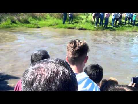 Romeria Belalcázar 2016. Caída de un jinete y su caballo al cruzar el río. Vídeo 7 de 8