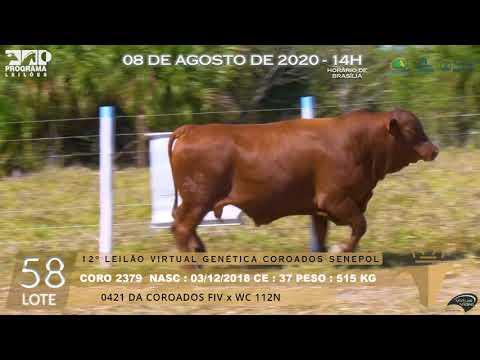 LOTE 58 CORO 2379