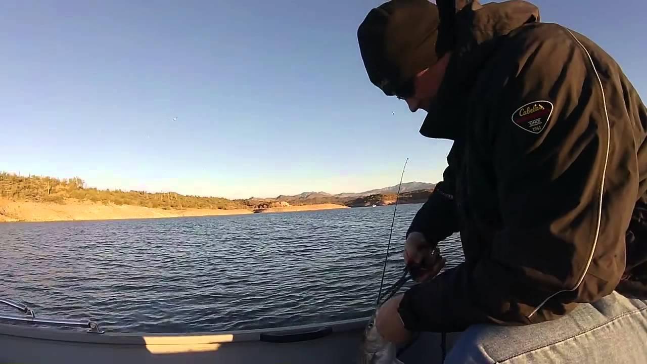 Lake pleasant striper fishing winter season youtube for Lake pleasant fishing report