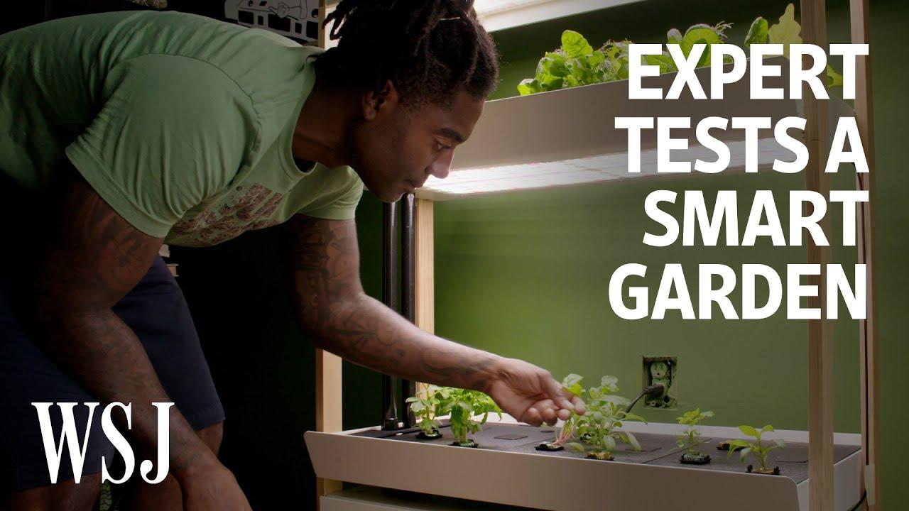 Can an Indoor Smart Garden Beat Outdoor Gardening? We Tested It   WSJ