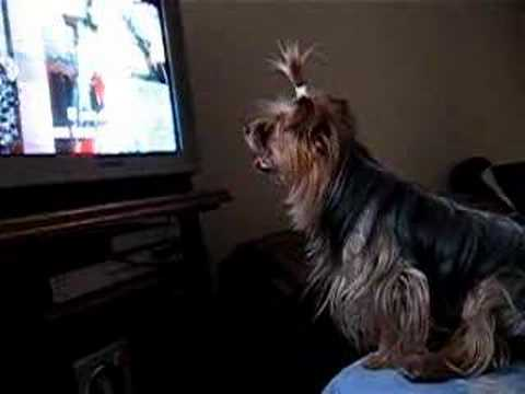 Tux viendo Tv
