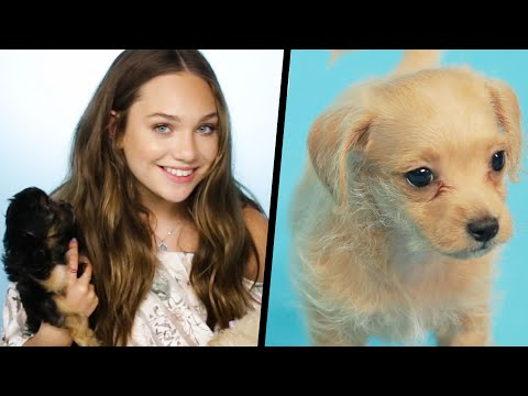 Maddie Ziegler Plays With Puppies (While Answering Fan Questions)