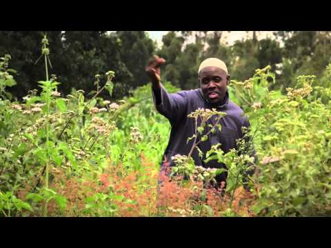 POPO on Zuku Swahili Movies Channel 210